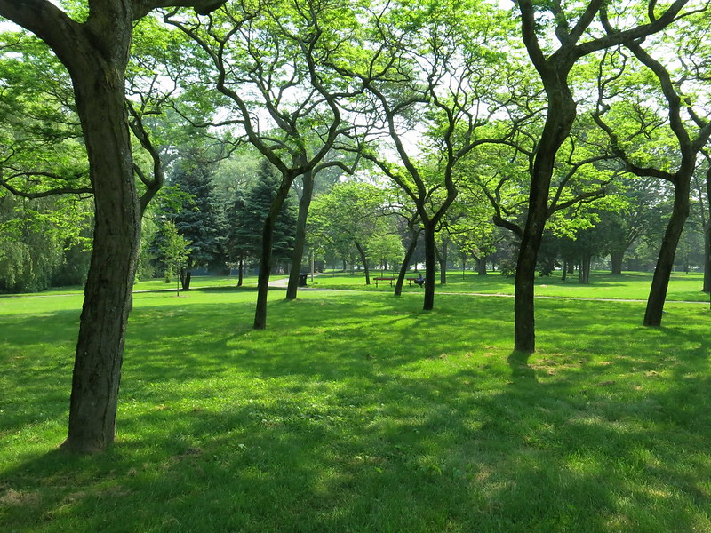 A pathway of trees on Toronto Island.