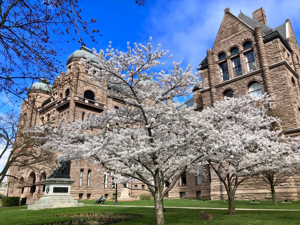 Cherry blossom trees in bloom in front of Queen's Park Toronto